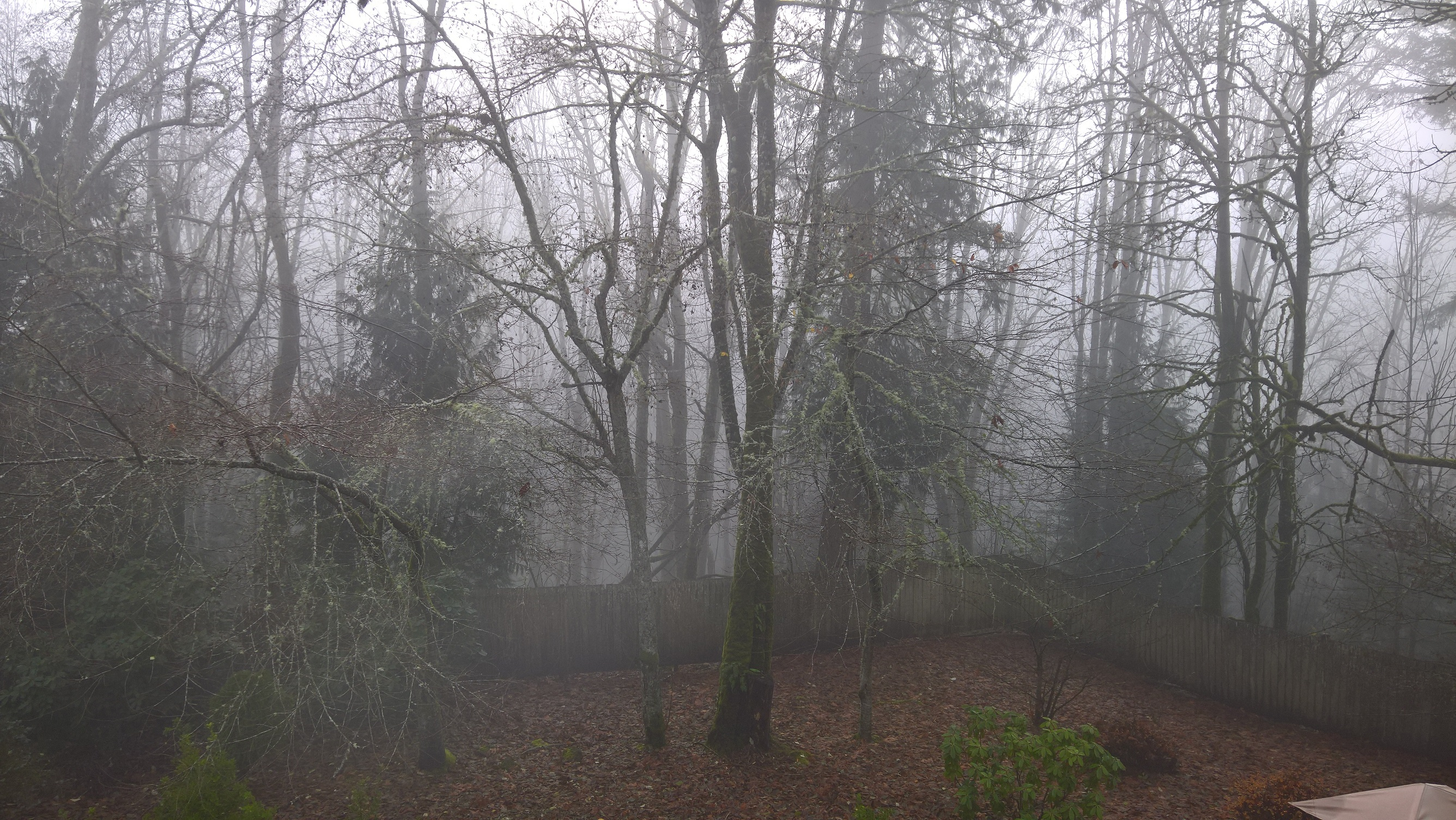 Misty backyard with leafless trees.